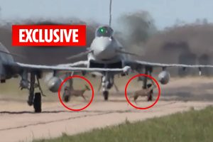 Incredible moment deer gallop across RAF base's runway as fighter jets are about to take off