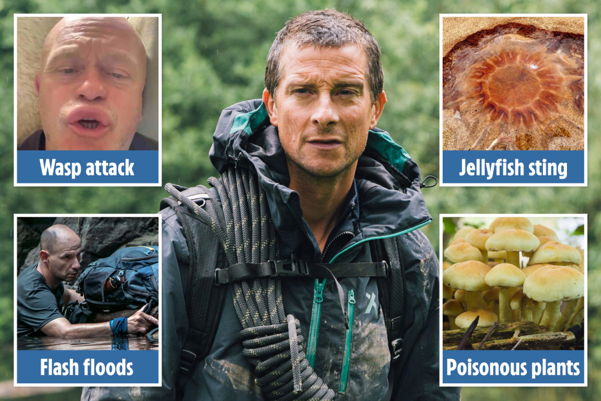 Bear Grylls' survival guide to the English countryside from wasp attacks to landslides