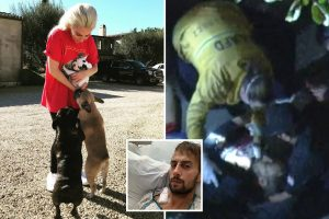 Lady Gaga dognapping 'may have been gang initiation' as cops 'tell star NOT to pay $500k reward to woman who found pups'