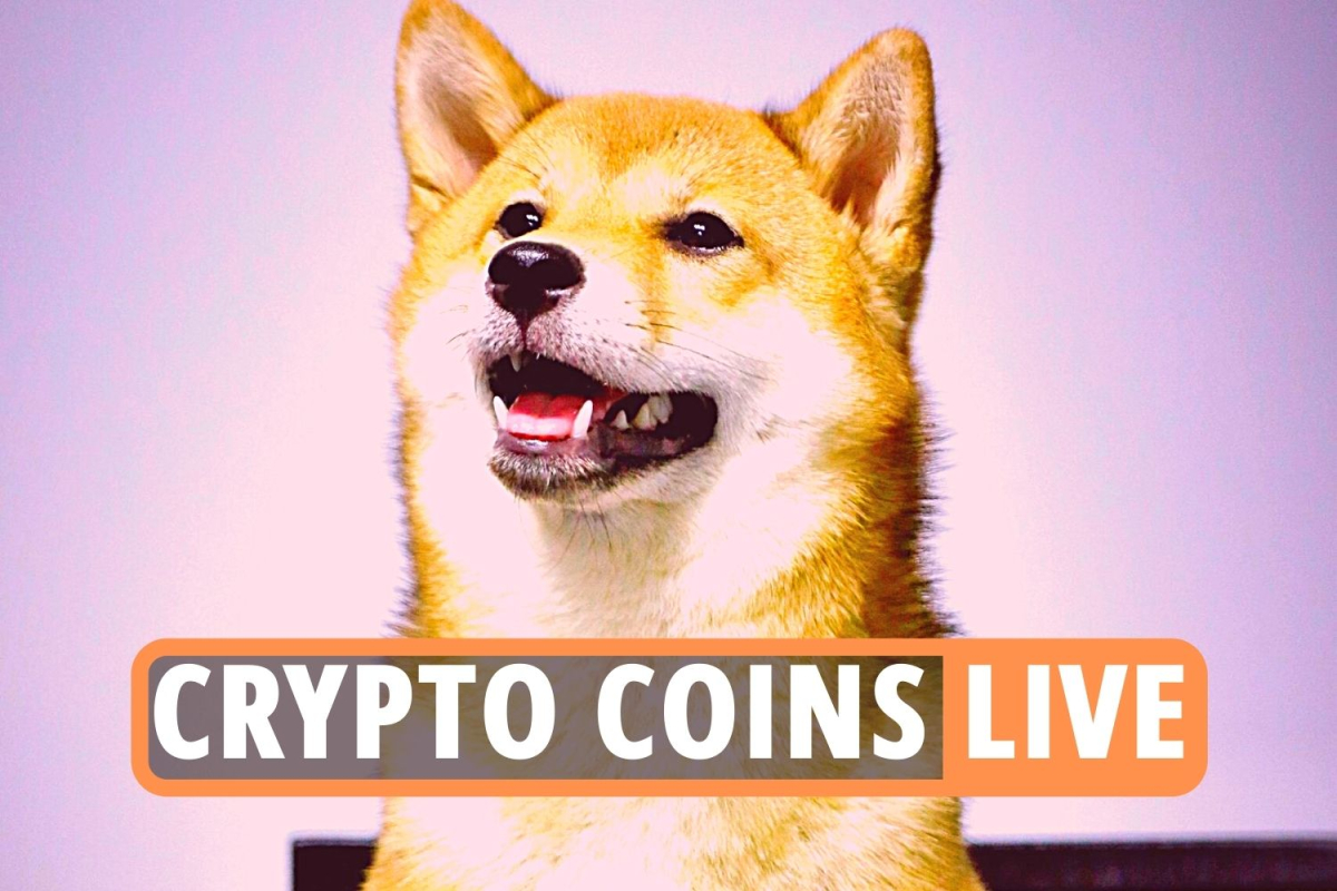 Bitcoin latest news – Cryptocurrency Shiba Inu now rivals Dogecoin as price soars and Ethereum rockets beyond $4,000
